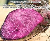 青空レストランで紹介された紫山芋