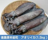 徳島県牟岐町アオリイカ販売青空レストラン