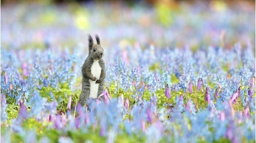 春の妖精 エゾリス まるで童話の世界 北海道浦臼 神社の境内で守谷遼平さん撮影 写真 作品